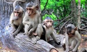 Từ việc sốt đất 'ảo' nghĩ về câu chuyện đảo khỉ