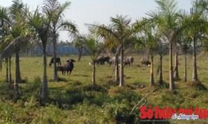 Tập đoàn Sun Group bỏ hoang Công viên Kim Quy?