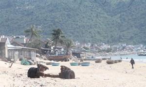 Huyện Vạn Ninh - Khánh Hòa: Cho phép giao dịch nhà đất trở lại