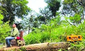 Điều tra độc quyền: Sun Group, Địa Ngục Tự và ma trận chiếm lĩnh rừng quốc gia Tam Đảo