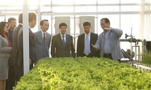 Thị trường nhiều biến động, doanh nghiệp bất động sản rẽ ngang sang nông nghiệp