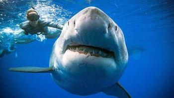 """""""Bơi theo cá mập""""  giới đầu tư cẩn thận """"đuối nước"""""""