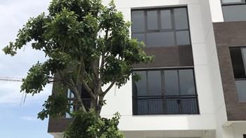 [Moi gioi]bán liền kề Hoàng Thành Villas, diện tích 104m2, lô góc mặt đường 21m, vỉa hè rộng 5m, 5 tầng - 2