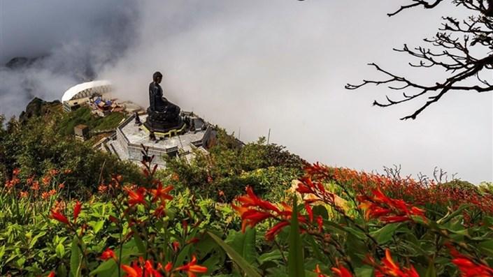 Mênh mông sắc vàng cam của hoa dơn lúa đẹp kiêu sa trên đỉnh Fansipan - 1