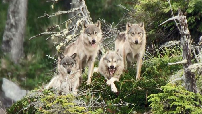 """8 bí mật của các """"sói già"""" bất động sản - 1"""