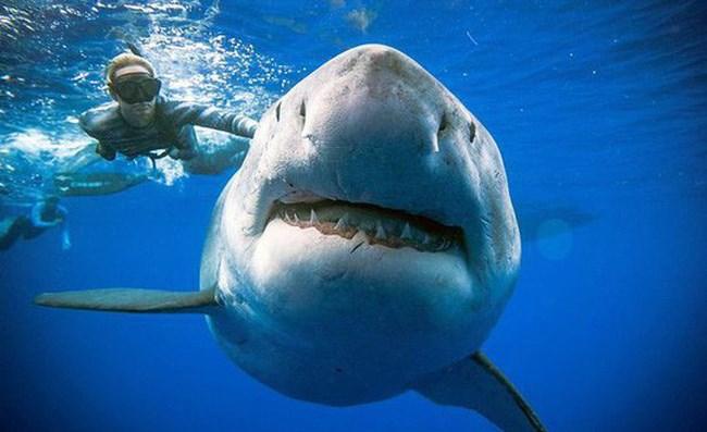 """""""Bơi theo cá mập""""  giới đầu tư cẩn thận """"đuối nước"""" - 1"""