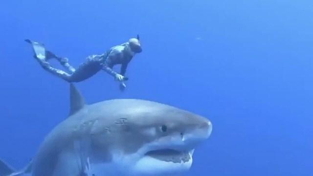 Bơi theo Cá Mập, kỹ thuật đón sóng, đớp mồi ( Bài 3) - 1