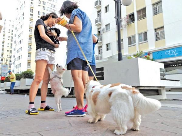 Quy định về cấm chăn, thả vật nuôi trong chung cư - 1