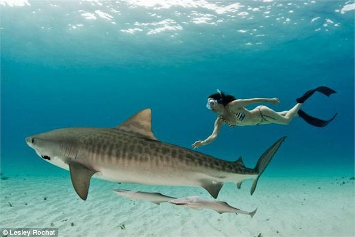 """""""Bơi theo cá mập"""" BĐS: Lựa chọn cá mập nào để theo? (Phần 2) - 1"""