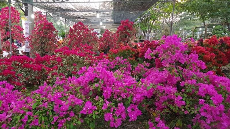Hoa Tết được bày bán la liệt trên nhiều tuyến phố ở Sài Gòn. Ảnh: Khổng Chiêm.
