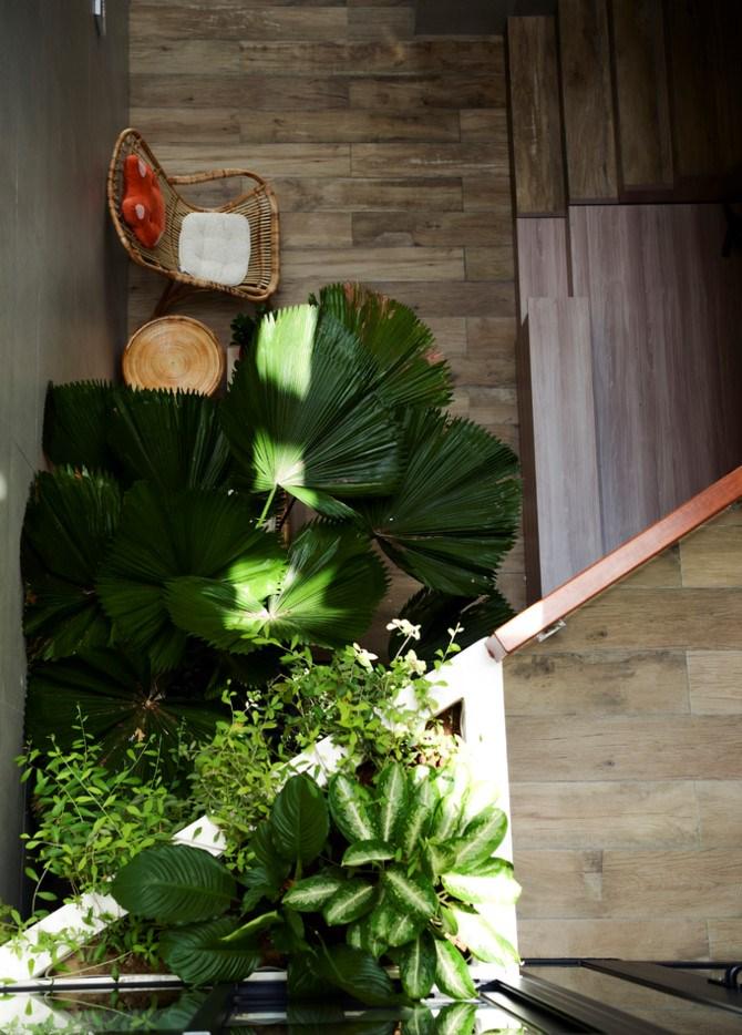 Cây nội thất xuất hiện khắp nơi, mang màu xanh vào trong không gian đồng thời giúp gia chủ gắn kết với thiên nhiên hơn.