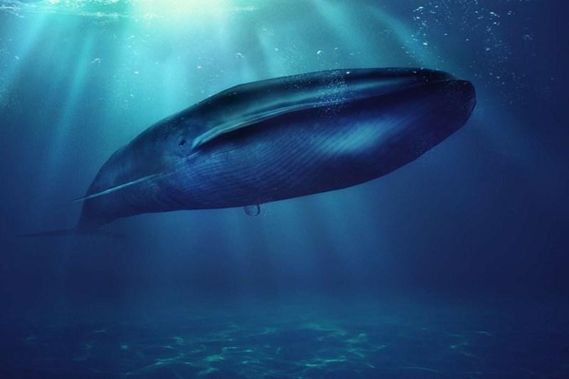Động vật lớn nhất - tính theo trọng lượng, Cá heo xanh, nặng 190000 kg