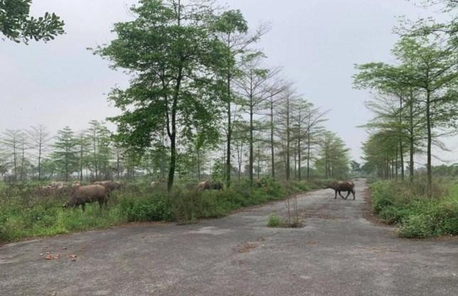 """Hàng loạt dự án """"treo"""" nhiều năm không triển khai gây lãng phí đất đai, thất thoát ngân sách Nhà nước. (Ảnh: Dự án khu đô thị được phê duyệt tại huyện Mê Linh-Hà Nội hơn chục năm vẫn bỏ hoang)"""