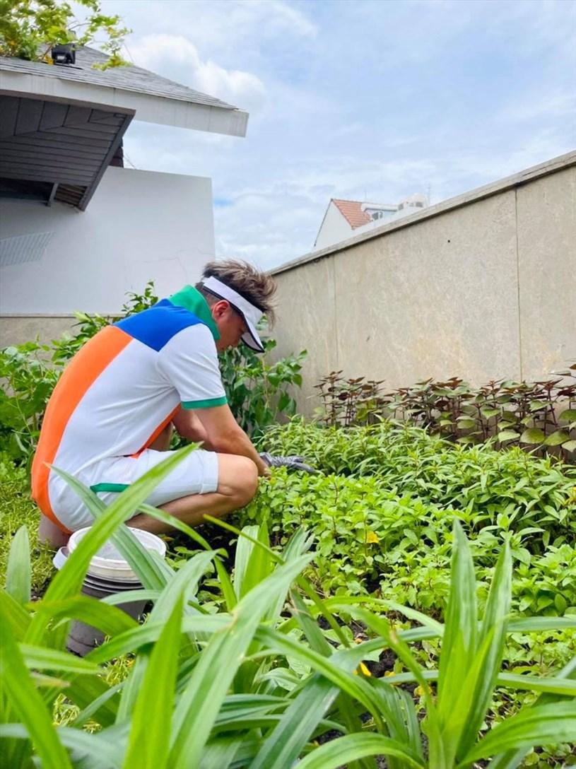 Nam ca sĩ tận dụng khu đất phía sau biệt thự để tạo một khu vườn nhỏ cho mình. Được biết, những luống rau được anh dùng chế biến các món ăn hằng ngày.