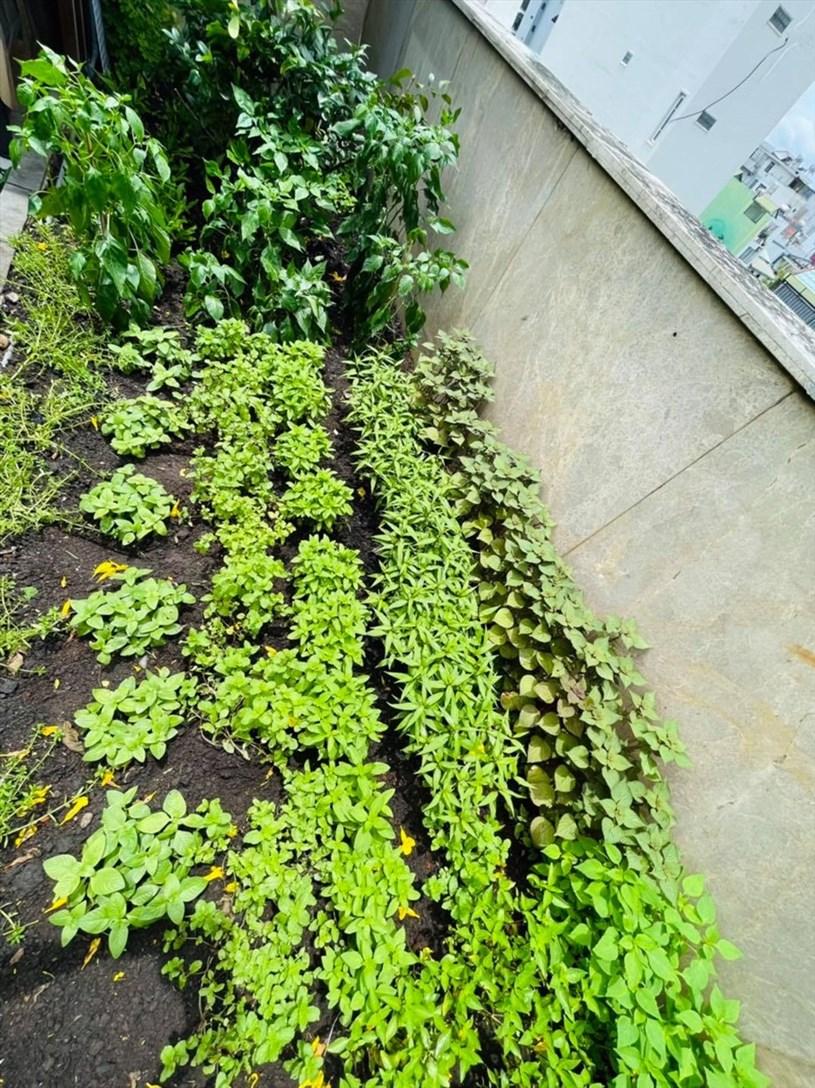 Khu vườn đa dạng rau, chủ yếu là các rau để nêm nếm cho các món ăn.