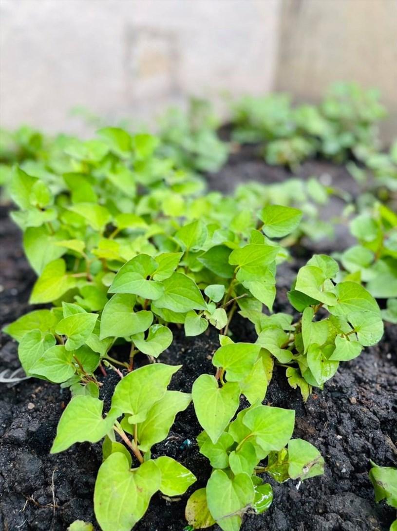 Ngắm khu vườn xanh mướt trong biệt thự 60 tỉ đồng của Đàm Vĩnh Hưng - Ảnh 2