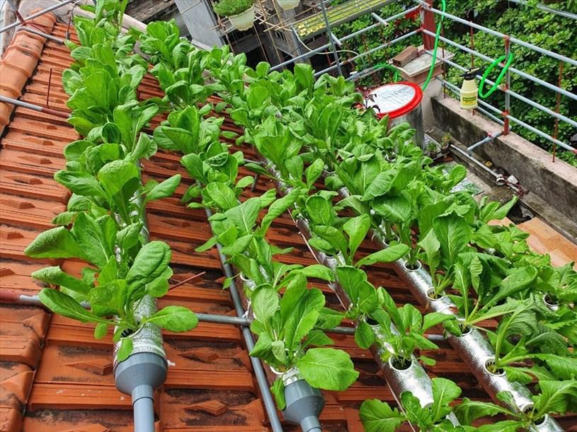 Mô hình trồng rau thủy canh trên mái nhà hoàn toàn do hai vợ chồng chị Lĩnh hoàn thiện, từ việc lên ý tưởng thiết kế đến đo đạc khoan cắt,....