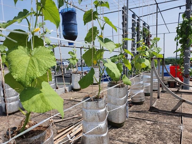 """""""Trong tình hình dịch bệnh căng thẳng, rau sạch trở thành một mặt hàng xa xỉ, tôi nghĩ các gia đình nên tận dụng không gian sân thượng để thiết kế các vườn rau. Đây sẽ là một hành động ý nghĩa và thiết thực, xóa tan nỗi lo về thực phẩm xanh trong mùa dịch""""- chị Lĩnh chia sẻ."""