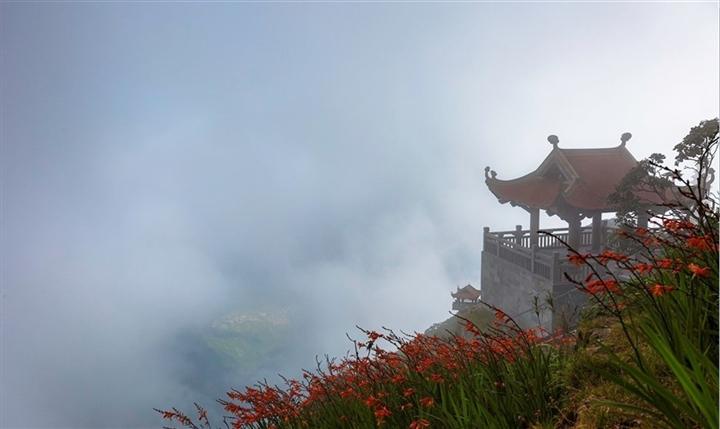 Mênh mông sắc vàng cam của hoa dơn lúa đẹp kiêu sa trên đỉnh Fansipan - Ảnh 3