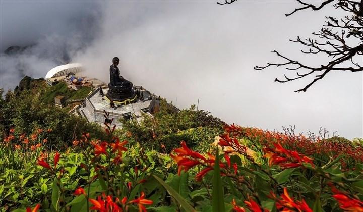 Mênh mông sắc vàng cam của hoa dơn lúa đẹp kiêu sa trên đỉnh Fansipan - Ảnh 1