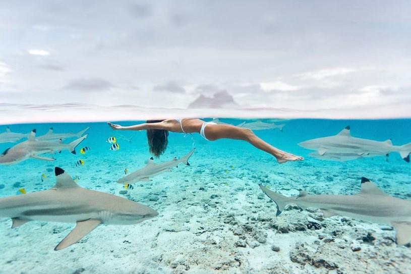 Bơi theo Cá Mập, kỹ thuật đón sóng, đớp mồi ( Bài 3) - Ảnh 1